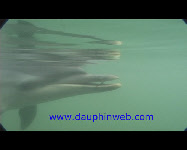 video dolphin